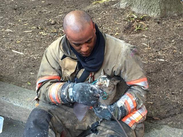 Cats rescued by Takoma Park firefighters