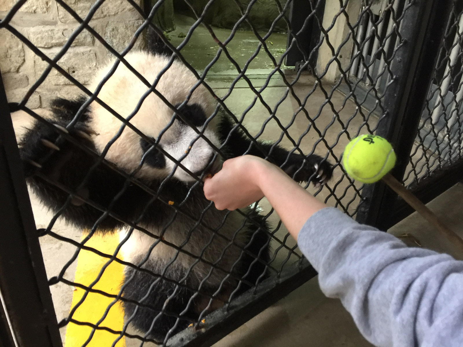 Go behind the scenes with Bei Bei