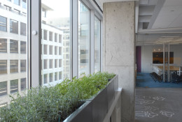 In this handout photo, an herb garden grows in the windows of the new home for the American Society of Interior Designers. The staff has moved into the new space at 1152 15th Street NW where they are testing the new office environs with the help of Cornell University. The space is intended to be a lab to test new standards and metrics for the office of the future. (Courtesy American Society of Interior Designers)