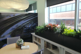In this handout photo, plants grow in the windows of the new home for the American Society of Interior Designers. The staff has moved into the new space at 1152 15th Street NW where they are testing the new office environs with the help of Cornell University. The space is intended to be a lab to test new standards and metrics for the office of the future. (Courtesy Liz Wainger/Wainger Group)