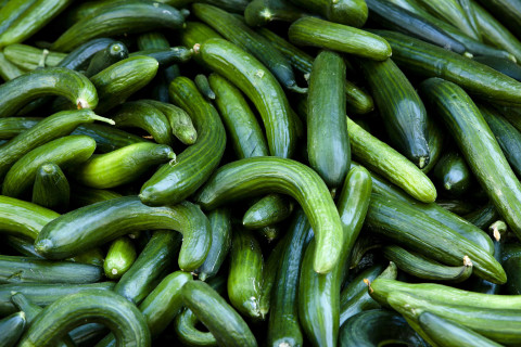 How to beat beetles and protect your cucumbers
