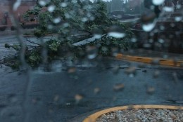 A downed tree seen on West Diamond Avenue in Gaithersburg, Maryland on June 21, 2016. (Photo submitted via WTOP app)