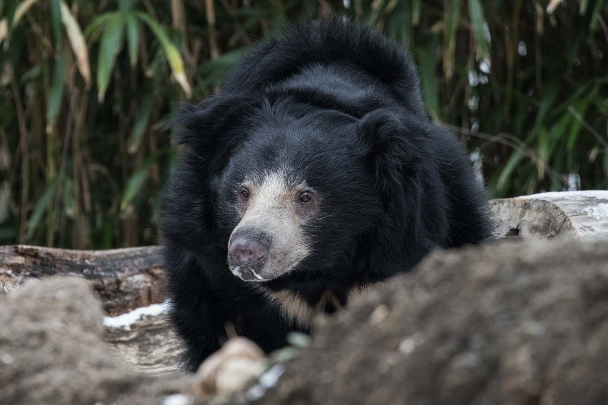 Sloth bear at National Zoo euthanized