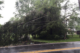 Snapped utility pole in Howard County. (WTOP/Michelle Basch)