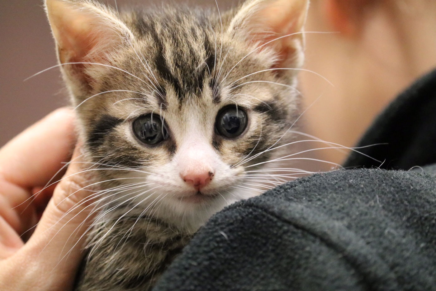 Md. animal shelter holds 'kitten shower,' hopes to attract more foster families