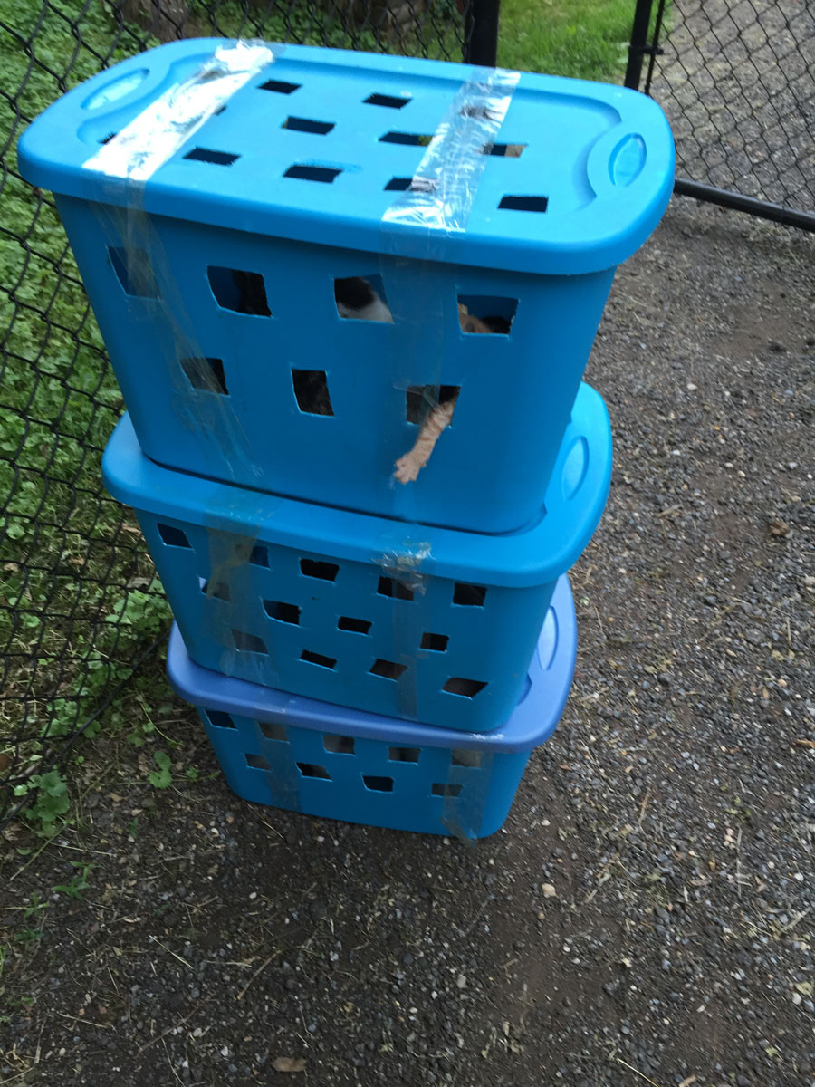 Boxes of cats and kittens left outside the Greenbelt animal shelter. (Courtesy Howard Stanback, Greenbelt animal control officer)