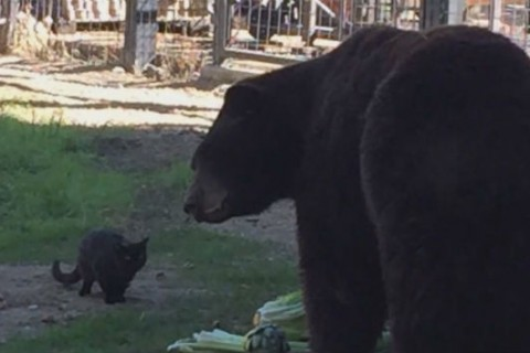 Feral cat and bear form unlikely friendship at zoo