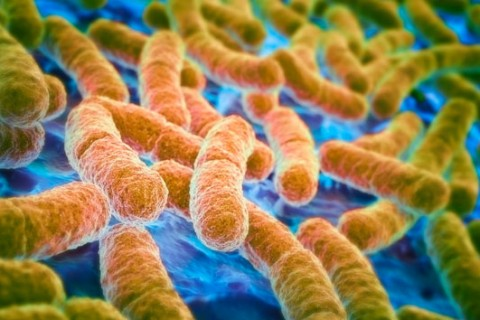 'Superbug' E. Coli found for just second time in US
