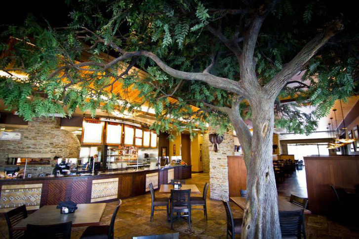 A Malawi Pizza Dining Room With Its Signature Acacia Tree The Company Which Is Opening First East Coast Location In Fredericksburg Virginia