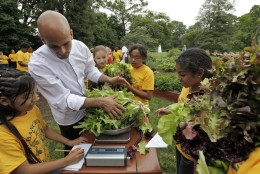 Fifth graders from Bancroft Elementary School and assistant White House Chef Sam Kass weigh some of the lettuce that they and first lady Michelle Obama harvested some of the vegetables that they planted in a garden on the South Lawn of the White House in Washington, Tuesday, June 16, 2009.(AP Photo/Alex Brandon)