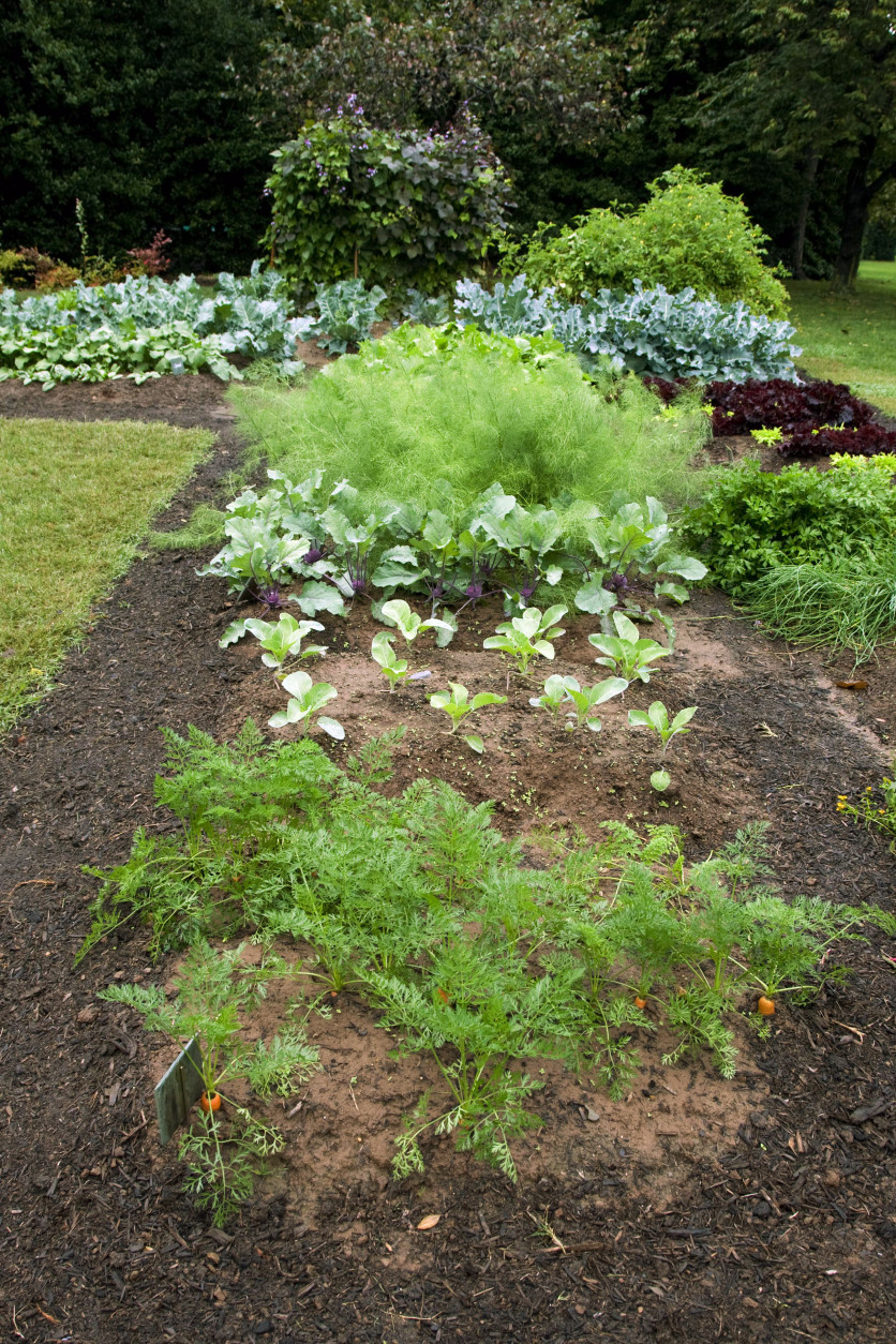 First lady Michelle Obama's vegetable and herb garden is seen on the grounds at the White House in Washington Thursday, Oct. 15, 2009.  (AP Photo/Alex Brandon)