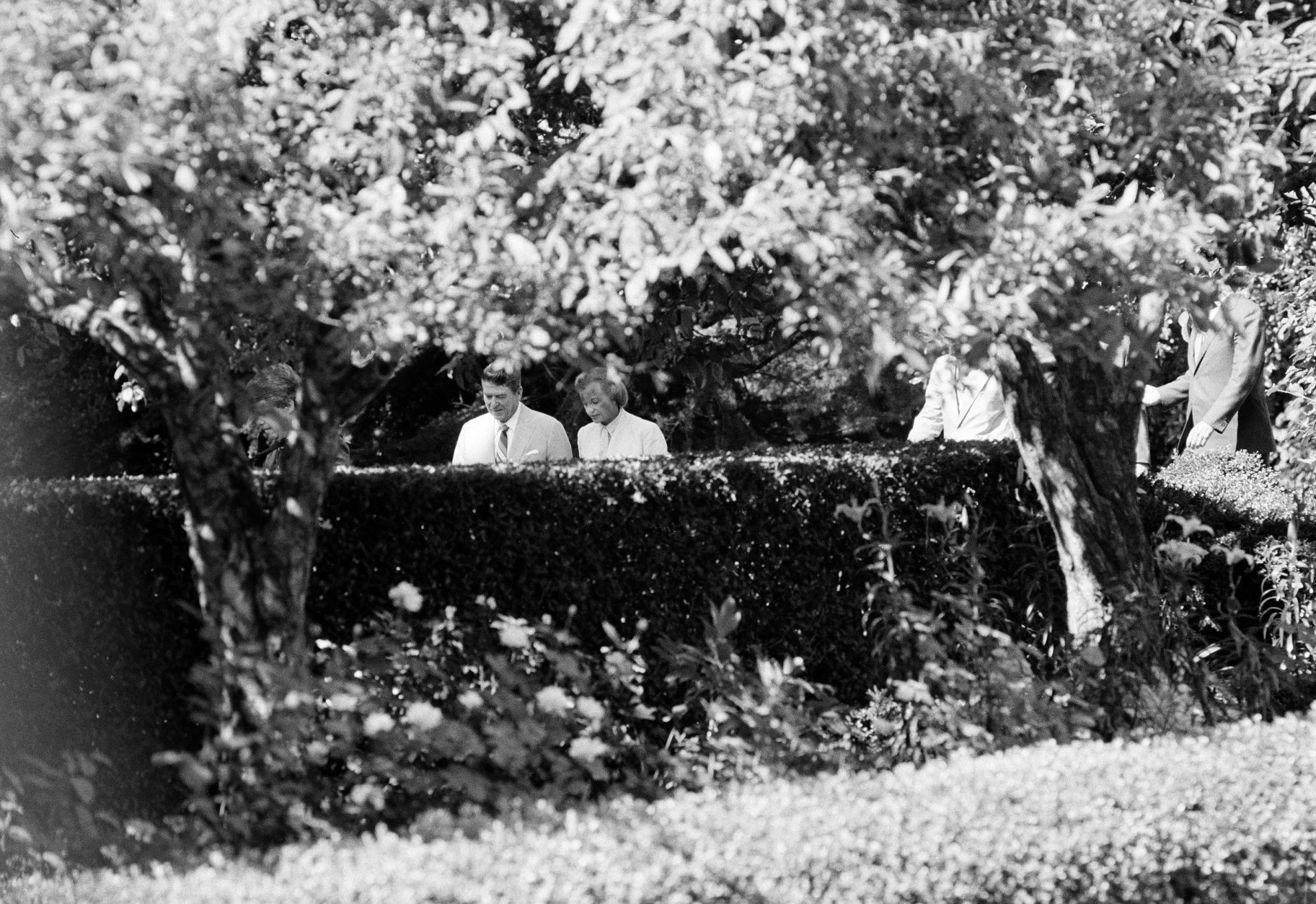 President Reagan and Supreme Court nominee Sandra Day O'Connor are surrounded by foliage as they stroll through the Rose Garden of the White House, July 15, 1981.  O'Connor is the first woman to be nominated to the position.  (AP Photo)