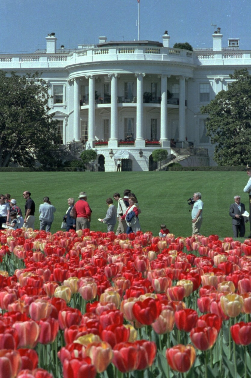 Members of the public walk past tulips growing on the South Lawn of the White House April 19, 1986, during the annual White House Spring Garden Tour. (AP Photo/J.Scott Applewhite)