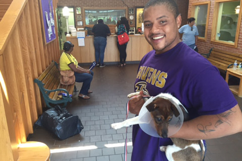 DC-area animal shelters waive pet adoption fees for the day