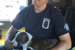 A Prince George's County Fire & EMS spokesman says the dogs seemed to enjoy their ride on the fire truck. (Courtesy Prince George's County Fire & EMS)