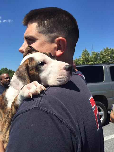 Firefighters prepare to give these dogs a ride home. Their owner had complained of chest pains but told arriving emergency responders that he had actually been drinking. (Courtesy Prince George's County Fire & EMS)