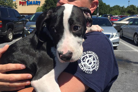 Photos: Dogs hitch ride on Prince George's Co. fire truck