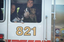 Photo of dogs in a firetruck