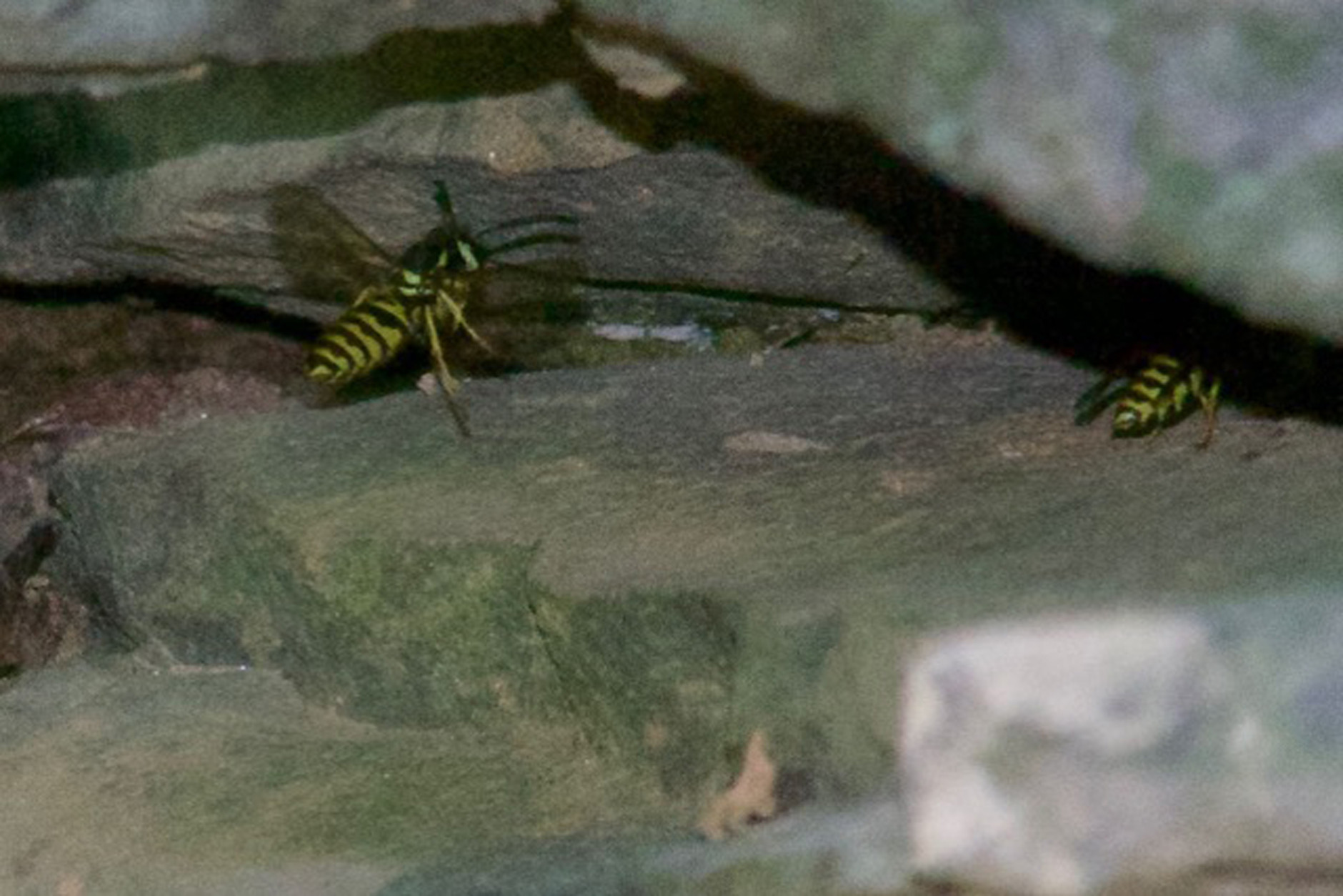 Letter writer Sean McDevitt wrote WTOP's Mike McGrath to ask about these yellow insects in his garden wall. (Courtesy Sean McDevitt)