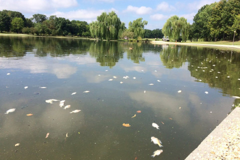 Heat wave causes fish kill in the District