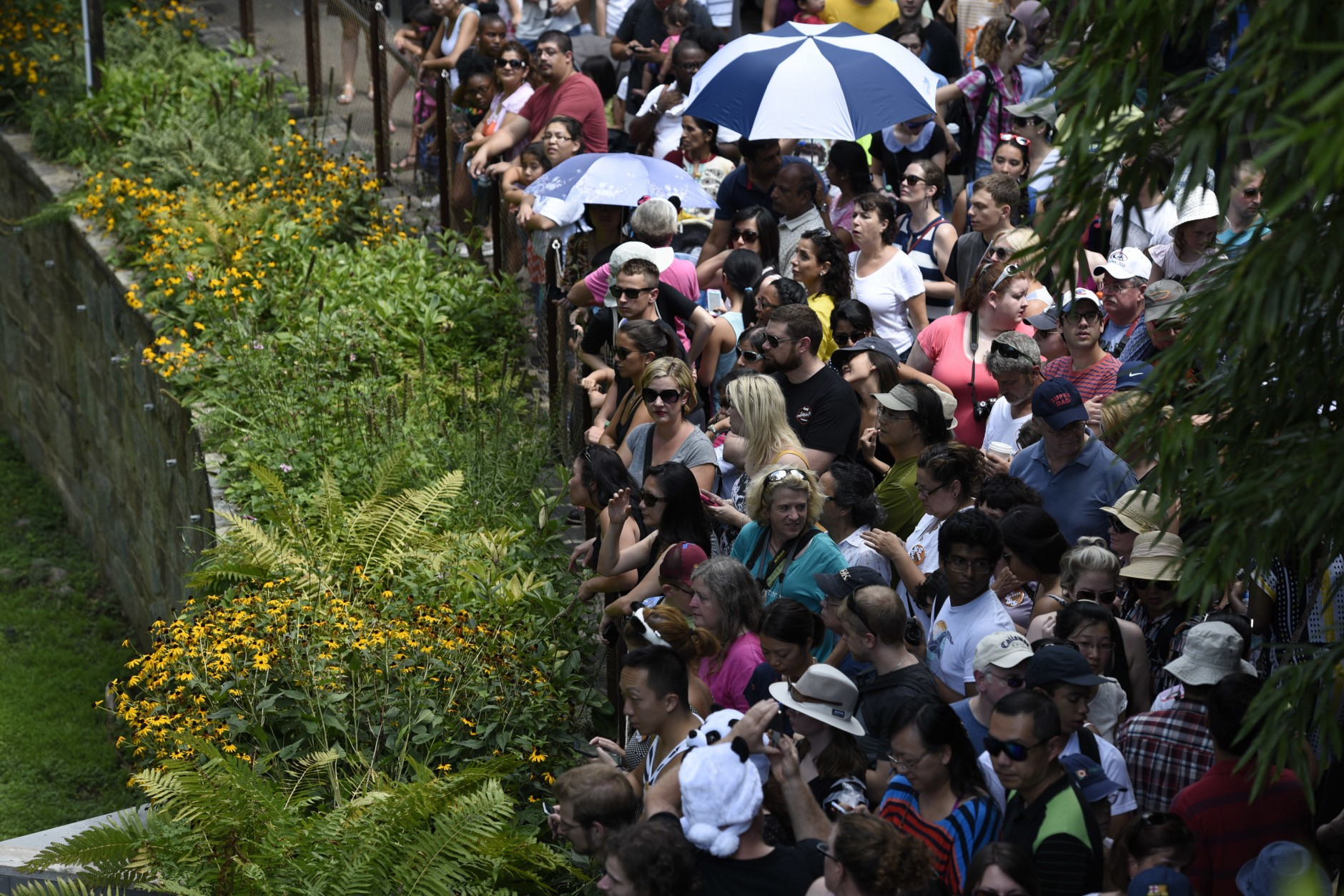 A crowd waits for giant panda cub Bei Bei at the National Zoo in Washington, Saturday, Aug. 20, 2016, where the zoo celebrated Bei Bei's first birthday. (AP Photo/Sait Serkan Gurbuz)