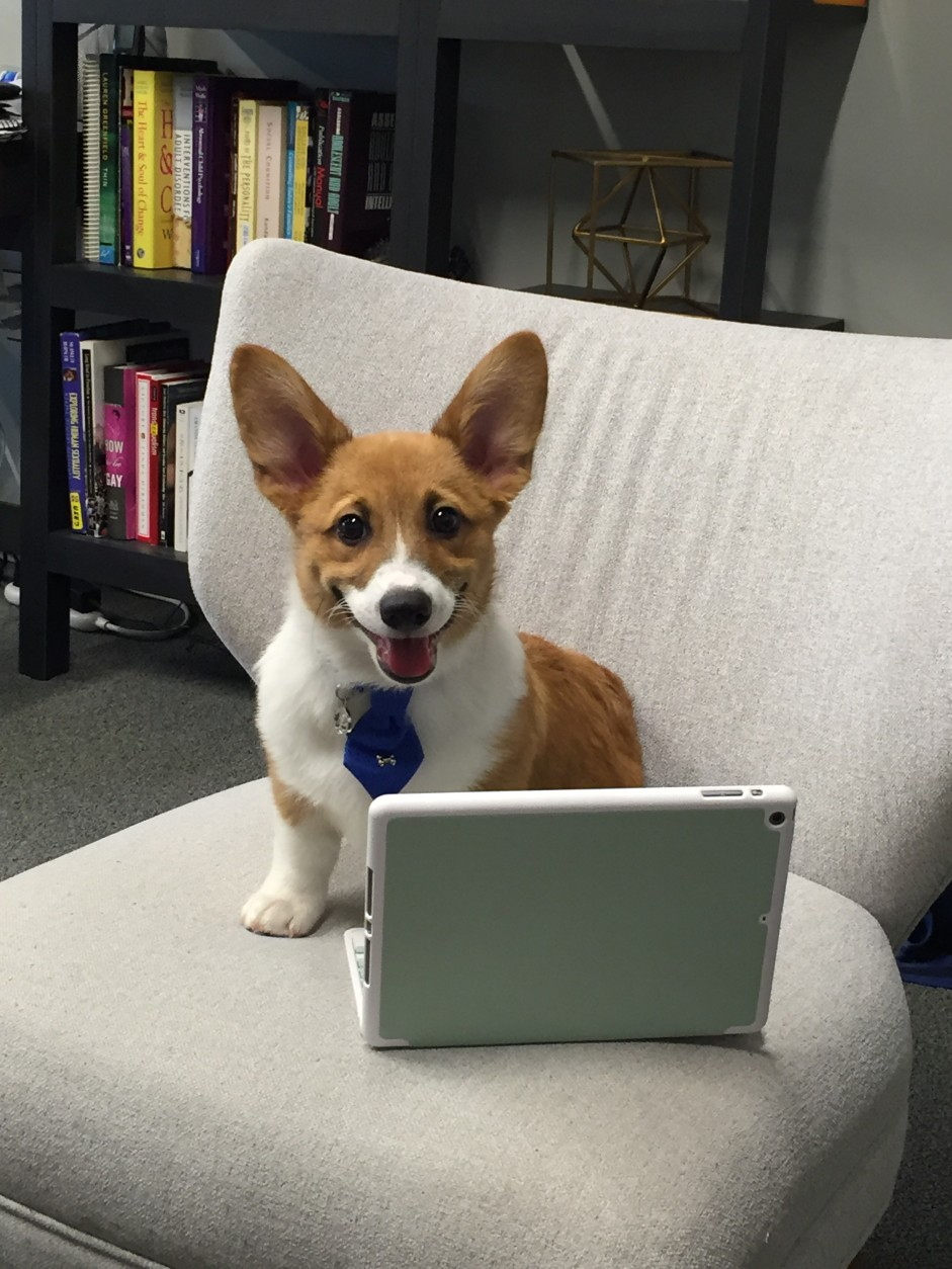 "As a puppy, Yogi was the official ""greeter"" at Jones' practice, Capital Center for Psychotherapy and Wellness. But as he grew and progressed through obedience training, he spent more time in sessions with patients. (Courtesy Gregory Jones)"