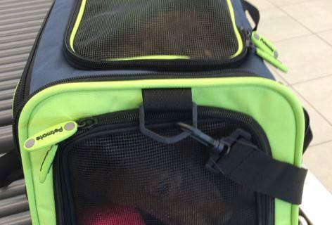BWI traveler arrested after sending gun, dog through X-ray machine