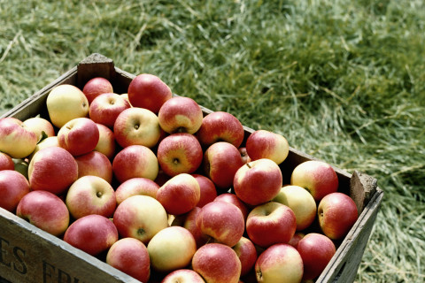It's prime time for apples, and the health benefits are many