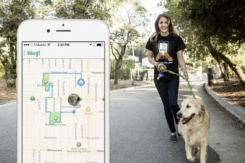 A dog-walking app comes to DC