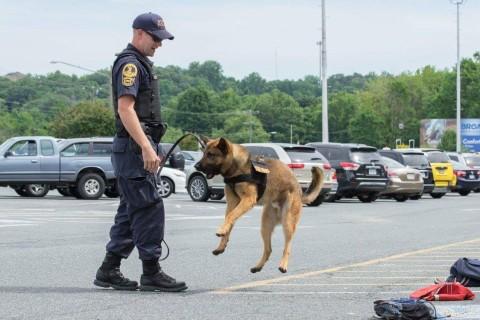 Missing Prince William Co. police dog has been found