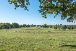 In this photo provided by Thomas and Talbot Real Estate, horses graze at the Wexford Estate, the more than 166-acre property a few miles from Middleburg that was once a retreat for the Kennedy family. Jacqueline Kennedy Onassis designed the yellow house that sits nesteled among the rolling hill and was built in 1963. (Courtesy Thomas and Talbot Real Estate and Mona Botwick Photography)