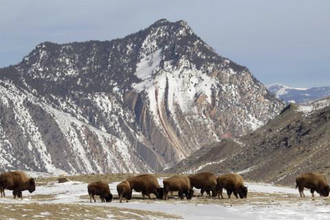 The 7 best U.S. National Parks for wildlife spotting