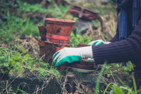 Why now is not a good time to start pruning your garden