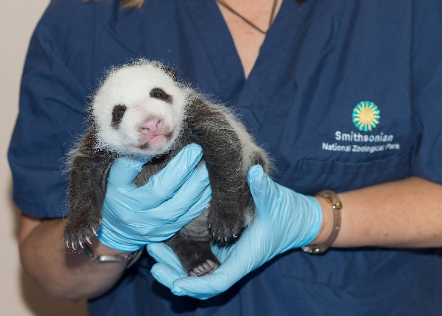 Bao Bao is seen as a baby. (Courtesy Smithsonian Institution/Abby Wood)