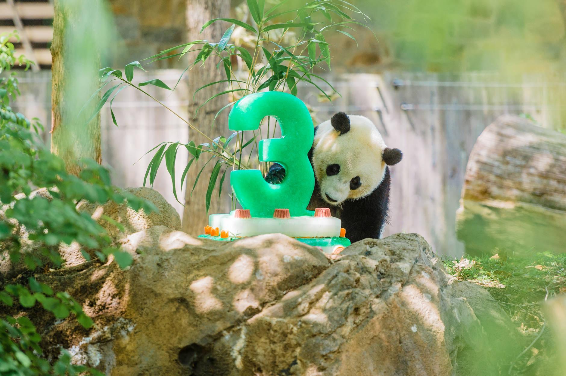 Bao Bao