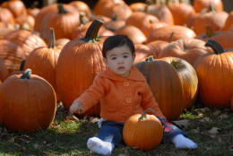 Layla Lasisomphone, 1,  of Groton Conn. blends in with the pumpkins at B.F. Clyde's Cider Mill in the Old Mystic section of Stonington, Conn. on Saturday Sept. 30, 2006. The steam powered cider mill was established in 1898. (AP Photo/Jack Sauer)
