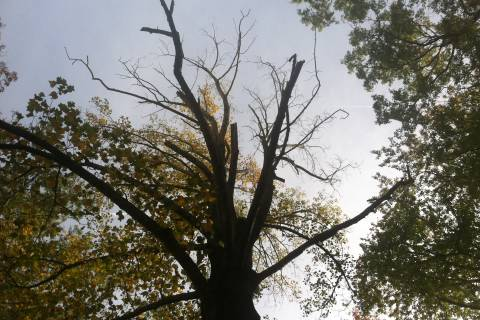 Before your backyard tree does damage, check its health