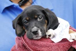 The Humane Rescue Alliance is thanking the community for its donations of towels, sheets and blankets that will serve as replacement bedding for animals who lost theirs in the weekend flood. (Courtesy Humane Rescue Alliance)