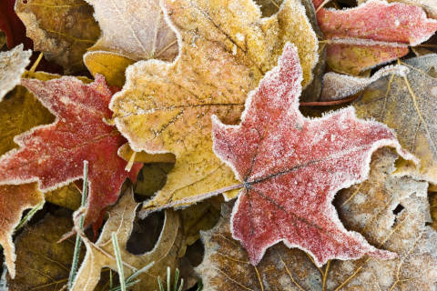 Frost advisory chills DC area for night, but don't say goodbye to warmth yet