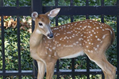 Earlier darkness, deer-mating season spell trouble for drivers