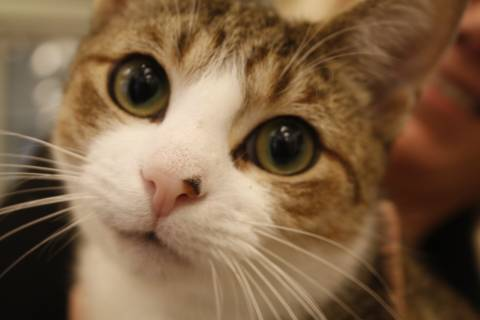 DC rescue group waives pet adoption fees (Photos)