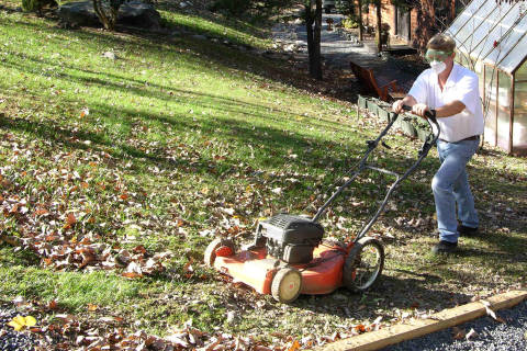 How to add leaf mulch to lawns; tips to prune azaleas