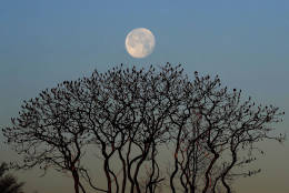 The waning moon sets behind leafless sumac trees on a crisp, clear morning, Thursday, Dec. 15, 2016, in Portland, Maine. Much of the northern Mid-Atlantic and Northeast will stay cold for the next couple of days as the arctic air remains stuck over the northern Appalachians, the National Weather Service said.  (AP Photo/Robert F. Bukaty)