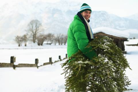 Got a live Christmas tree for replanting? Time is a-wasting