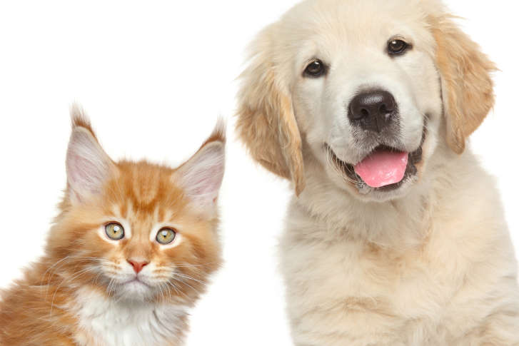 cloning a pet involves some unpleasant facts explains one
