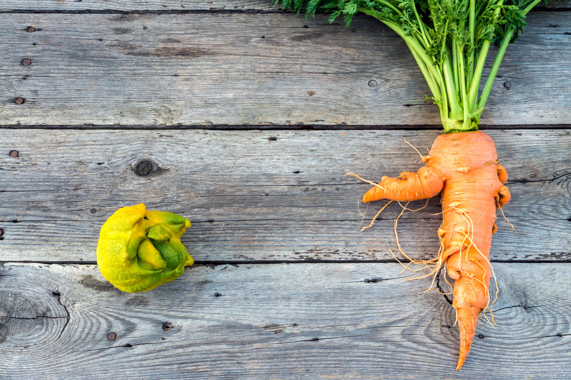 Top flat lay view of trendy ugly organic carrot and lemon from home garden on barn wood table, Australian grown.