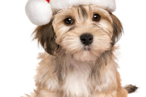 Why you might rethink getting that puppy for Christmas