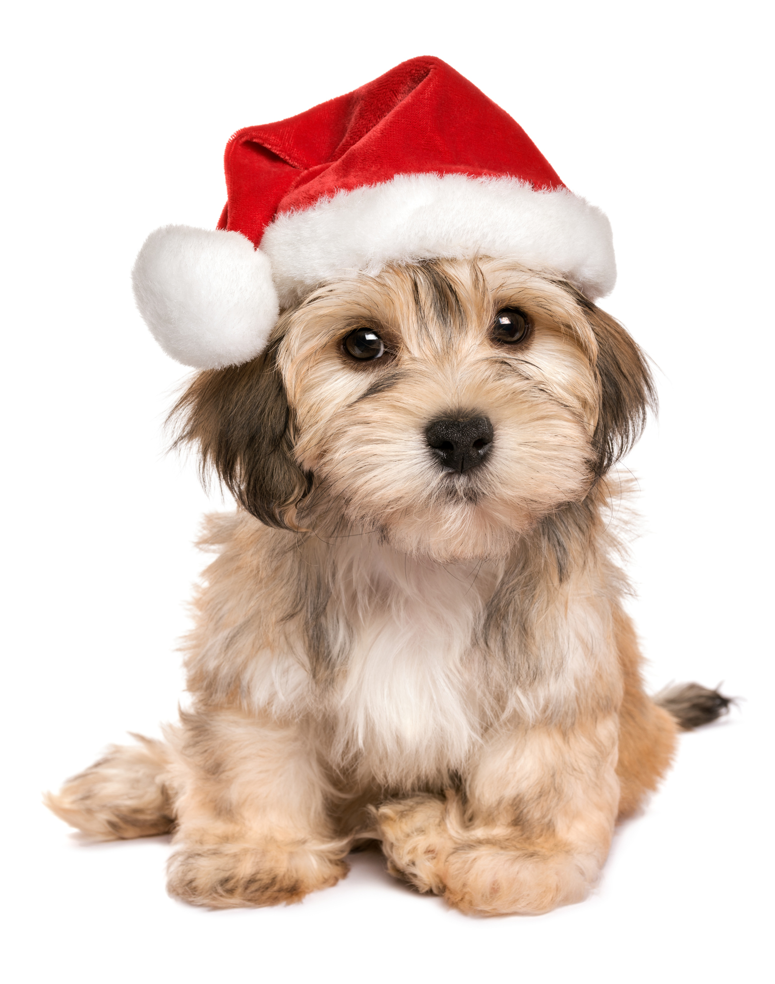 why you might rethink getting that puppy for christmas wtop