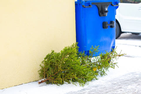Done with your Christmas tree? Here's how to pitch it