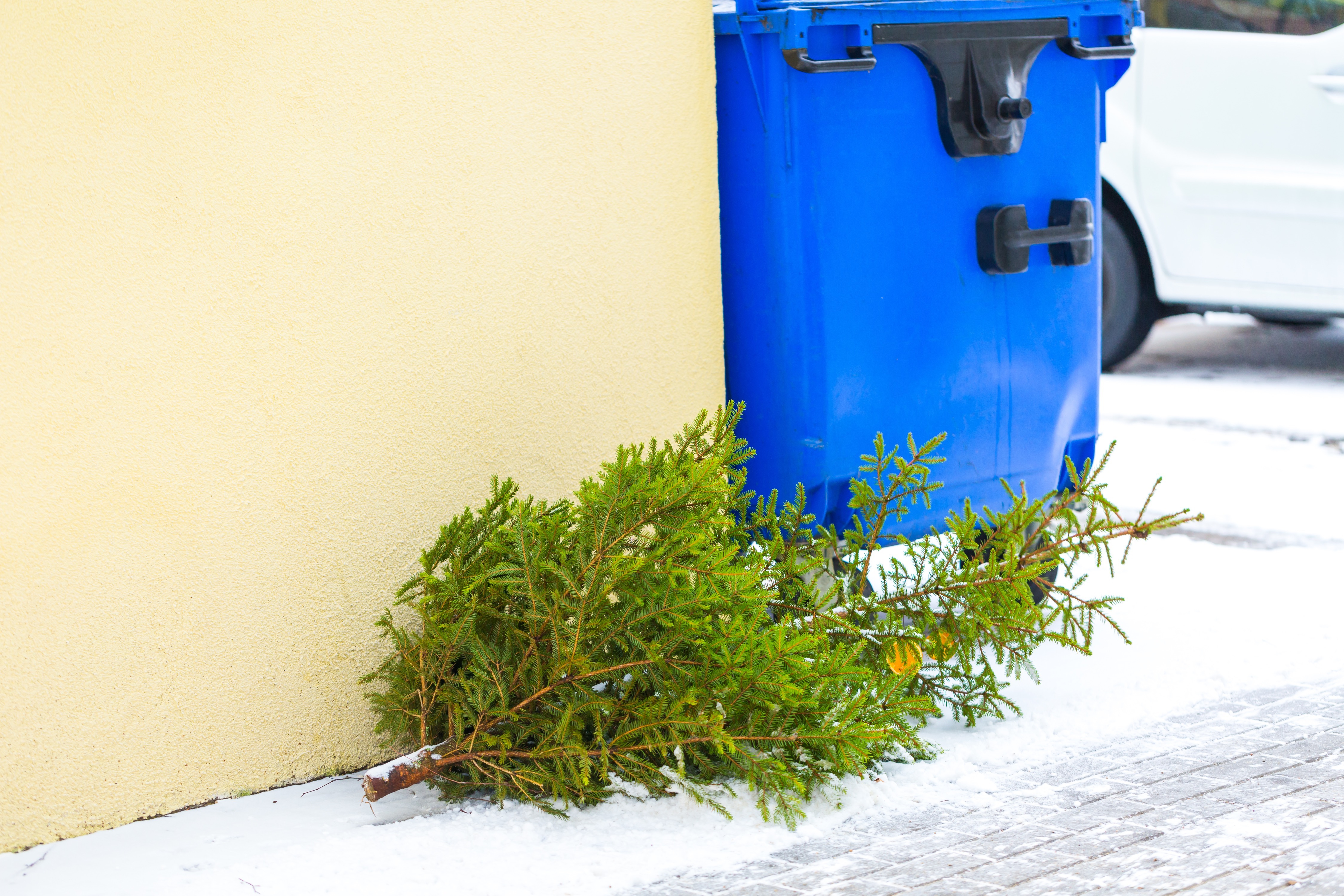 Done With Your Christmas Tree? Here's How To Pitch It WTOP - Baltimore City Christmas Tree Pickup